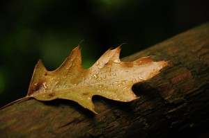 oak-leaf-horns-ferry-hideaway
