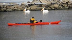 kayaking-pelicans-lake-red-rock-horns-ferry-hideaway