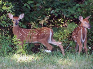 fawns-lake-red-rock-horns-ferry-hideaway