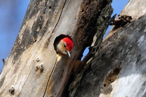 woodpecker-lake-red-rock-horns-ferry-hideaway